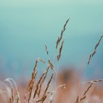 hay-blue-sky